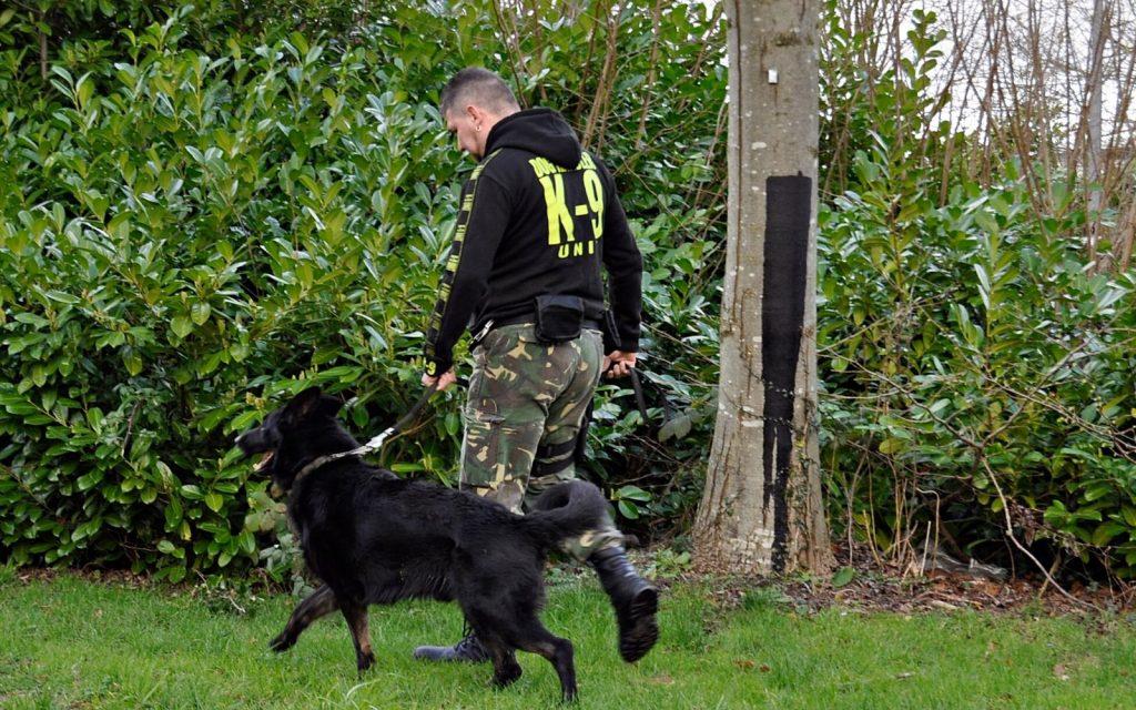 brylant k9 dog handling (6)